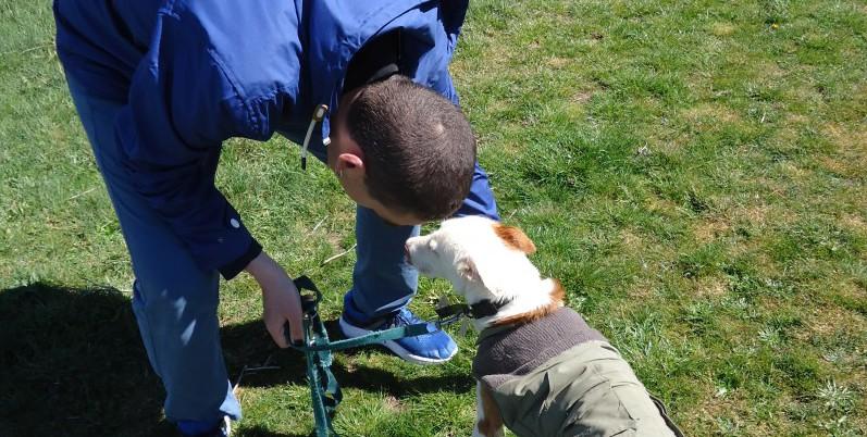 Faema Terapia Canina